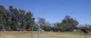 Ponycamp-0017