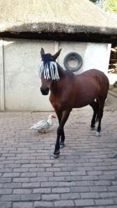 Ghazal sporting her new fly fringe...