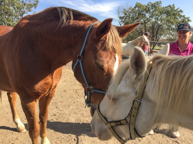 Crumble and Guiness - Therapeutic horses