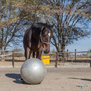 Rheims our new horse